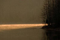 Sunlight reflecting on a lake, Couchville Lake, Montgomery Bell State Park, Tennessee, USA