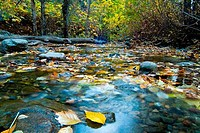 Stream flowing through a forest, Mueller Park, Davis County, Utah, USA