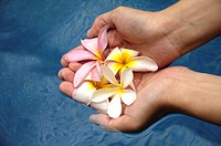 Close_up of a woman holding frangipani flowers