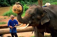 Elephant show para tourists  Ma Ping  Chiang Mai  Thailand