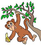 Monkey with banana on tree _ isolated illustration.