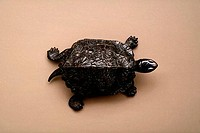 The Tortoise 16th Century Master from Padua 16th C. Bronze State Hermitage Museum, St. Petersburg, Russia