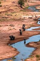 African elephants Loxodonta africana at a river, Tarangire River, Tarangire National Park, Tanzania