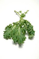 Close_up of kale leaves