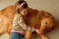 High angle view of a girl leaning on a Golden Retriever