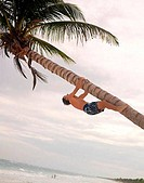 Man climbing leaning palm tree above Caribbean water MEXICO Quintana Roo