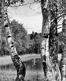 Vintage photograph of boy and girl fly_fishing, as seen from between beech trees