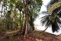 Roots of rainforest trees, Isla Carenero, Bocas Del Toro, Panama