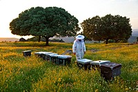 Beekeeping or apiculture, Garciaz, Las Villuercas, Caceres, Extremadura, Spain, Europe.