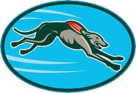 Greyhound racing and jumping set inside oval