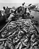 CONGO: FISHERMEN, 1951.Fishermen displaying their catch of the day on Lake Edward, Virunga National Park, Democratic Republic of the Congo. Photograph...