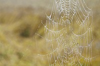 Spider web, close up, differential focus