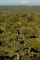 High angle view of trees in a forest, Kruger Park, South Africa