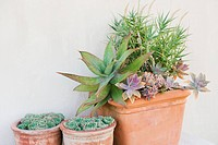 Close_up of potted plants