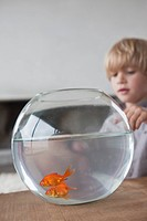Close_up of a boy looking at fishbowl