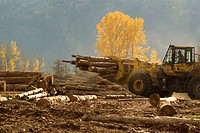 Front end loader moving logs at cedar mill near Kamloops, B.C., Canada