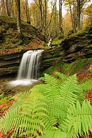 Waterfall in beech forest, Puerto de La Sía, Cantabria, Spain