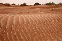 wet sand-dunes after raining, Sahara, Morocco