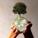 Hands holding planet earth with tree growing on it