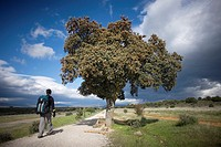 A pilgrim walks in a track of the French Way that leads to Santiago de Compostela, Way of Saint James, Castilla Leon, Spain. Hundred of thousands pilg...