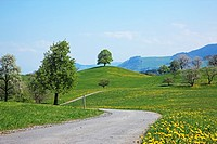 Trees on fields in spring, Switzerland, Canton Zug, Menzingen