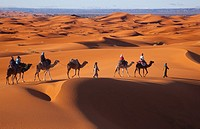 Camals at Dawn Erg Chebbi Dunes Sahara Desert Morocco North Africa March