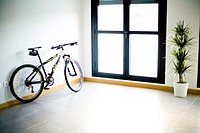 Bicycle and Plant in home
