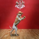 Dogs ballroom dancing together