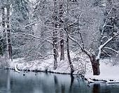 Winter snow on vegetation bordering pond, Crystal Springs Rhododendron Garden, Multnomah County, Portland, Oregon, USA
