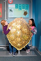 Two girls standing behind green sea turtle shell