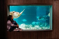 Girl watching sea turtle in aquarium (thumbnail)