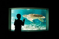 Boy watching sea turtle in aquarium (thumbnail)