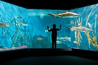 Boy watching sharks in aquarium