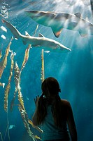 Girl watching sharks in aquarium