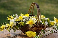 Basket with flowers: daffodils and cherry tree blossoms