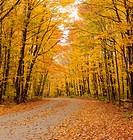Arowhon Road, Algonquin Provincial Park, Ontario, Canada