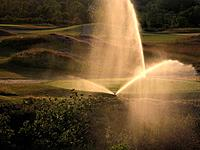 Canada, Ontario, Welland. Early evening watering at Lochness Links Golf Course