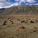 Argentina - Patagonia - Semidesertic steppe