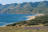 Italy - Sardinia Region - Surroundings of Gonnesa (Province of Carbonia-Iglesias) - Porto Paglia and Fontanamare beach.