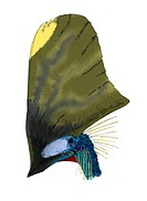 Pterosaur headcrest, artwork. Tupandactylus imperator was a pterosaur species that lived 112 million years ago. It had the largest head crest of any p...