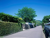 Fresh green, Obi, castle town, Nichinan, Miyazaki, Kyushu, Japan