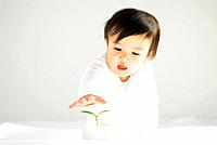 Baby boy crawling towards seedling in a pot