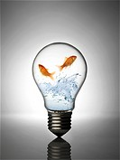 Light bulb and fish