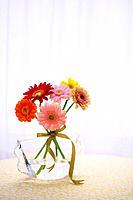 Gerbera Daisies in a vase