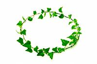 Ivies making circle, white background