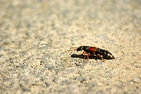bug crawling over gravel road