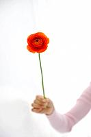 Woman holding orange ranunculus
