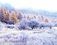 Trees covered in frost, Senjogahara, Nikko, Tochigi Prefecture, Japan
