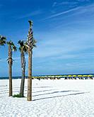 Beach. White sand. Three palm trees. Rows of sunbeds.