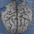 gray matter brain puzzle
